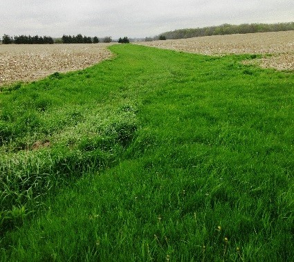 Cover Crop Selection and P Release with Winter Onset